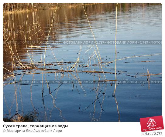 Сухая трава, торчащая из воды, фото № 2787, снято 30 апреля 2006 г. (c) Маргарита Лир / Фотобанк Лори
