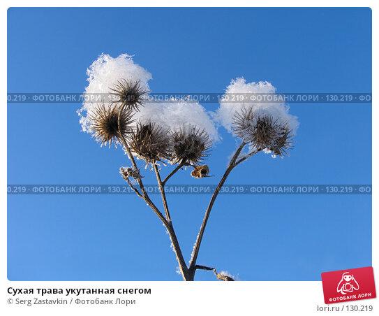 Сухая трава укутанная снегом, фото № 130219, снято 18 декабря 2005 г. (c) Serg Zastavkin / Фотобанк Лори