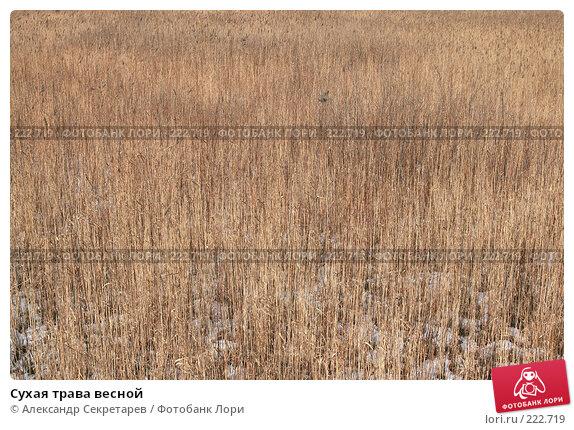 Купить «Сухая трава весной», фото № 222719, снято 10 марта 2008 г. (c) Александр Секретарев / Фотобанк Лори