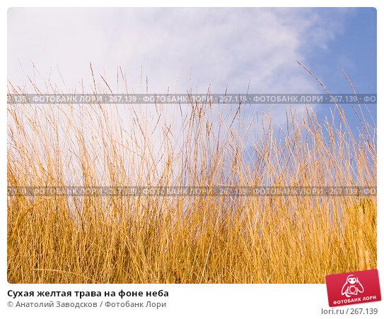 Сухая желтая трава на фоне неба, фото № 267139, снято 24 сентября 2006 г. (c) Анатолий Заводсков / Фотобанк Лори