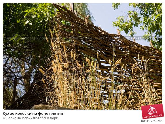Сухие колоски на фоне плетня, фото № 99743, снято 25 июля 2007 г. (c) Борис Панасюк / Фотобанк Лори