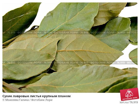 Сухие лавровые листья крупным планом, фото № 76919, снято 13 мая 2007 г. (c) Моисеева Галина / Фотобанк Лори