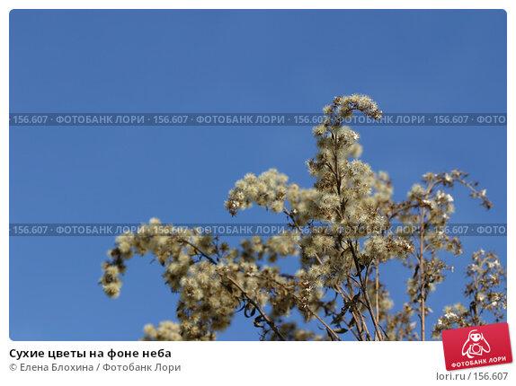 Сухие цветы на фоне неба, фото № 156607, снято 27 марта 2007 г. (c) Елена Блохина / Фотобанк Лори