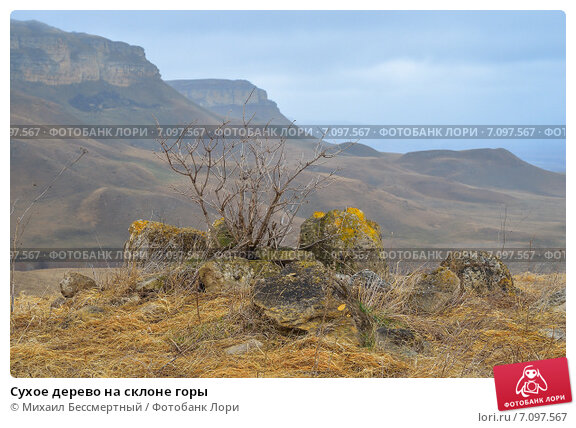 Сухое дерево на склоне горы. Стоковое фото, фотограф Михаил Бессмертный / Фотобанк Лори