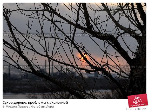 Купить «Сухое дерево, проблемы с экологией», фото № 308791, снято 10 марта 2008 г. (c) Михаил Павлов / Фотобанк Лори