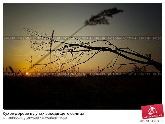 Купить «Сухое дерево в лучах заходящего солнца», фото № 336319, снято 30 мая 2008 г. (c) Савинский Дмитрий / Фотобанк Лори