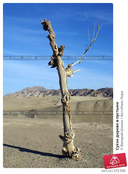 Купить «Сухое дерево в пустыне», фото № 272939, снято 29 ноября 2007 г. (c) Валерий Шанин / Фотобанк Лори