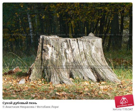 Сухой дубовый пень, фото № 110547, снято 30 сентября 2007 г. (c) Анастасия Некрасова / Фотобанк Лори