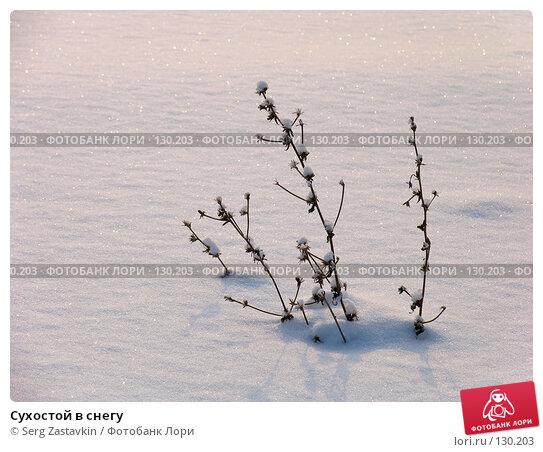 Сухостой в снегу, фото № 130203, снято 15 декабря 2004 г. (c) Serg Zastavkin / Фотобанк Лори
