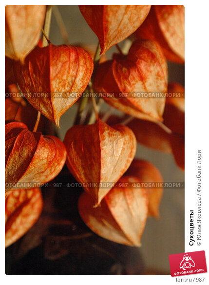 Сухоцветы, фото № 987, снято 27 февраля 2006 г. (c) Юлия Яковлева / Фотобанк Лори