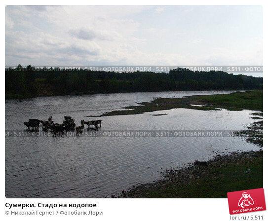 Сумерки. Стадо на водопое, фото № 5511, снято 19 июля 2005 г. (c) Николай Гернет / Фотобанк Лори