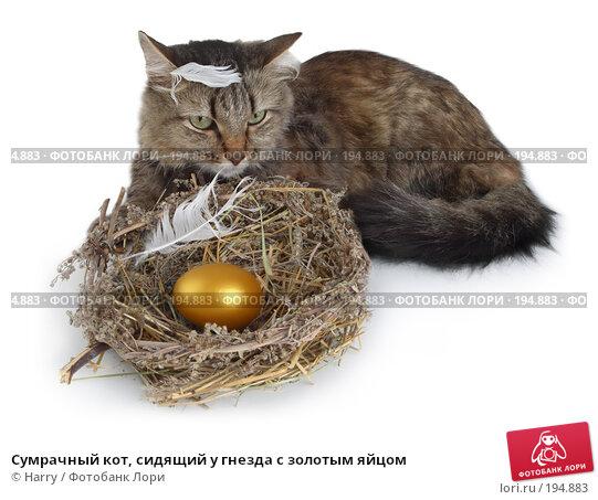 Сумрачный кот, сидящий у гнезда с золотым яйцом, фото № 194883, снято 3 октября 2007 г. (c) Harry / Фотобанк Лори