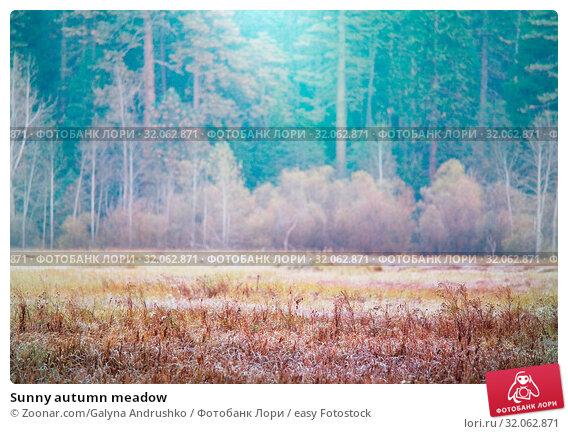 Sunny autumn meadow. Стоковое фото, фотограф Zoonar.com/Galyna Andrushko / easy Fotostock / Фотобанк Лори