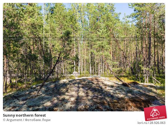 Купить «Sunny northern forest», фото № 28926063, снято 18 июля 2018 г. (c) Argument / Фотобанк Лори