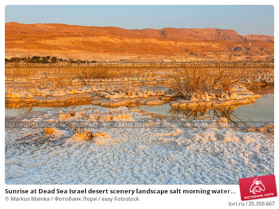 Sunrise at Dead Sea Israel desert scenery landscape salt morning water... Стоковое фото, фотограф Markus Mainka / easy Fotostock / Фотобанк Лори