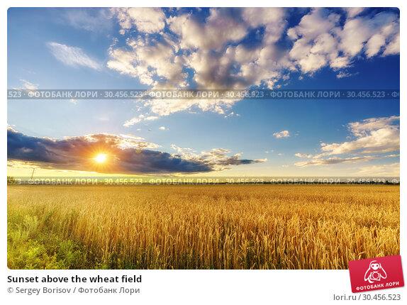 Sunset above the wheat field. Стоковое фото, фотограф Sergey Borisov / Фотобанк Лори