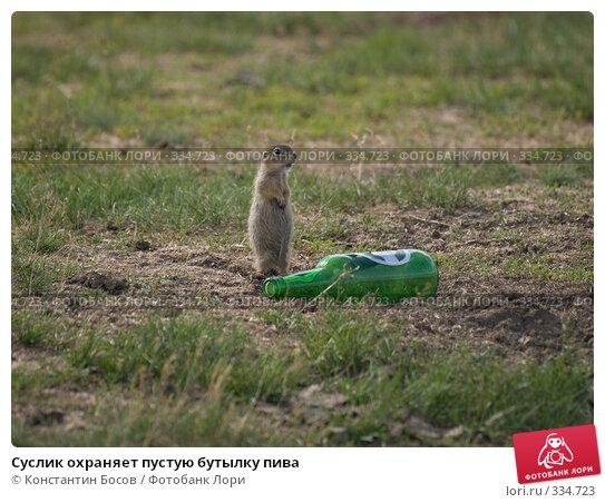 Суслик охраняет пустую бутылку пива, фото № 334723, снято 27 мая 2017 г. (c) Константин Босов / Фотобанк Лори