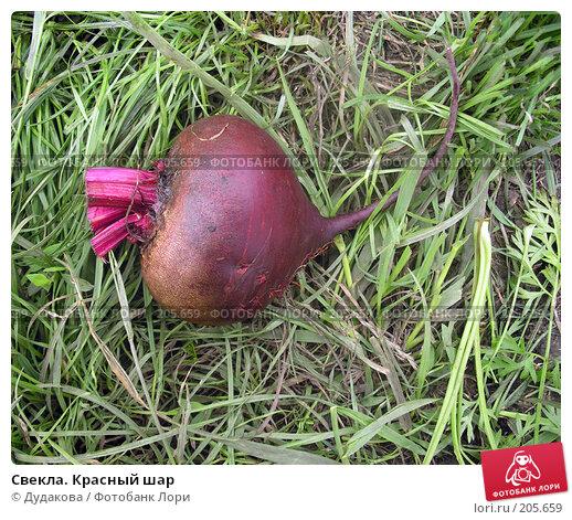 Свекла. Красный шар, фото № 205659, снято 21 июля 2007 г. (c) Дудакова / Фотобанк Лори