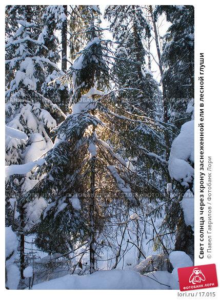 Купить «Свет солнца через крону заснеженной ели в лесной глуши», фото № 17015, снято 11 февраля 2007 г. (c) Павел Гаврилов / Фотобанк Лори