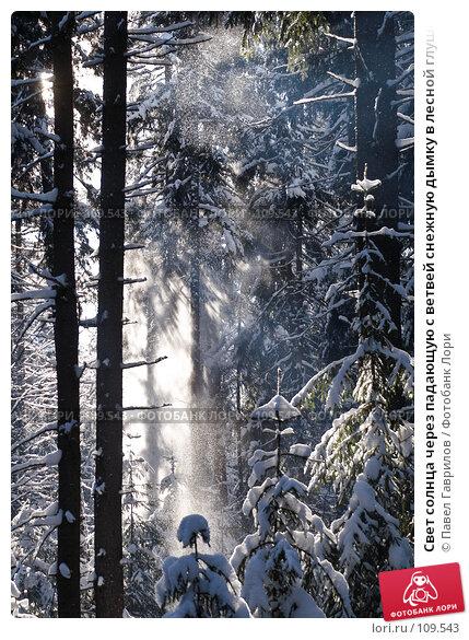 Свет солнца через падающую с ветвей снежную дымку в лесной глуши, фото № 109543, снято 11 февраля 2007 г. (c) Павел Гаврилов / Фотобанк Лори