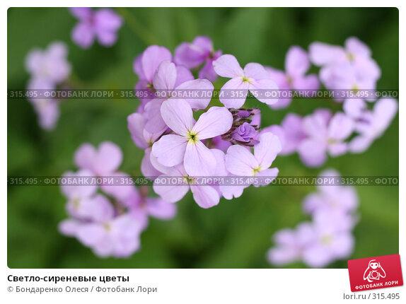 Светло-сиреневые цветы, фото № 315495, снято 7 июня 2008 г. (c) Бондаренко Олеся / Фотобанк Лори