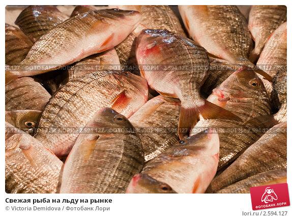 Купить «Свежая рыба на льду на рынке», фото № 2594127, снято 30 ноября 2010 г. (c) Victoria Demidova / Фотобанк Лори