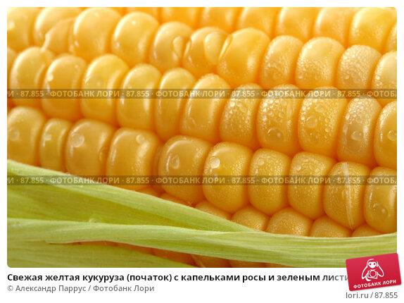 Свежая желтая кукуруза (початок) с капельками росы и зеленым листиком, фото № 87855, снято 18 сентября 2007 г. (c) Александр Паррус / Фотобанк Лори