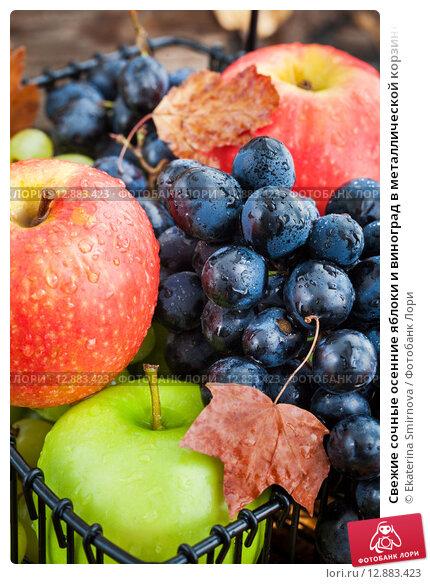 Купить «Свежие сочные осенние яблоки и виноград в металлической корзине на деревянном фоне», фото № 12883423, снято 11 сентября 2015 г. (c) Ekaterina Smirnova / Фотобанк Лори
