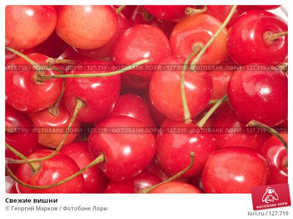 Свежие вишни, фото № 127719, снято 12 июля 2006 г. (c) Георгий Марков / Фотобанк Лори