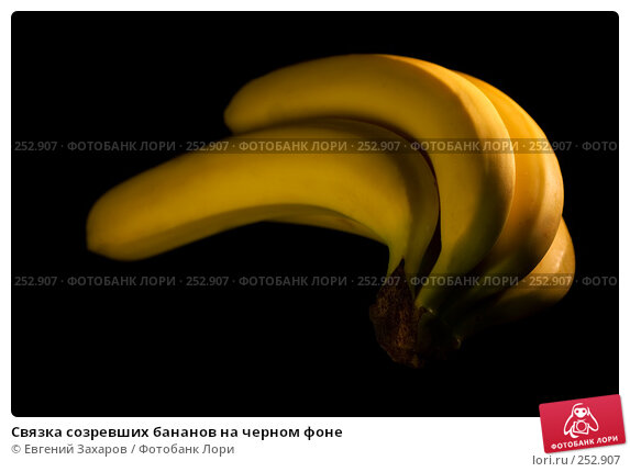 Купить «Связка созревших бананов на черном фоне», фото № 252907, снято 13 апреля 2008 г. (c) Евгений Захаров / Фотобанк Лори