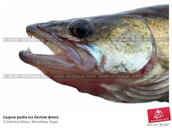 Купить «Сырая рыба на белом фоне», фото № 36947, снято 27 октября 2006 г. (c) Vdovina Elena / Фотобанк Лори
