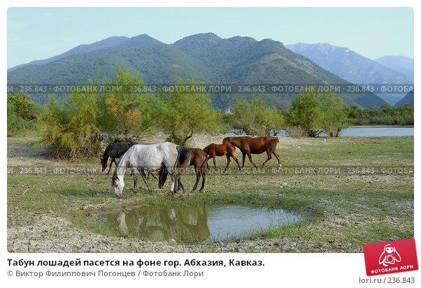 Табун лошадей пасется на фоне гор. Абхазия, Кавказ., фото № 236843, снято 28 августа 2006 г. (c) Виктор Филиппович Погонцев / Фотобанк Лори