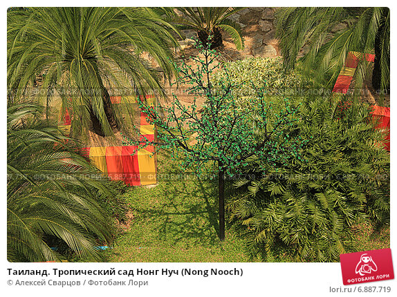 Купить «Таиланд. Тропический сад Нонг Нуч (Nong Nooch)», фото № 6887719, снято 22 февраля 2014 г. (c) Алексей Сварцов / Фотобанк Лори