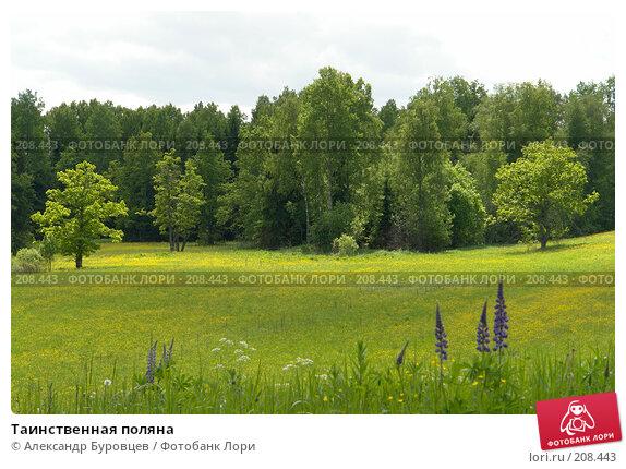 Таинственная поляна, фото № 208443, снято 16 июня 2006 г. (c) Александр Буровцев / Фотобанк Лори