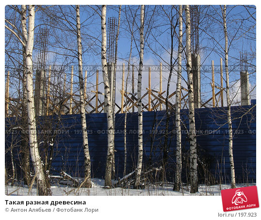 Такая разная древесина, фото № 197923, снято 3 февраля 2008 г. (c) Антон Алябьев / Фотобанк Лори