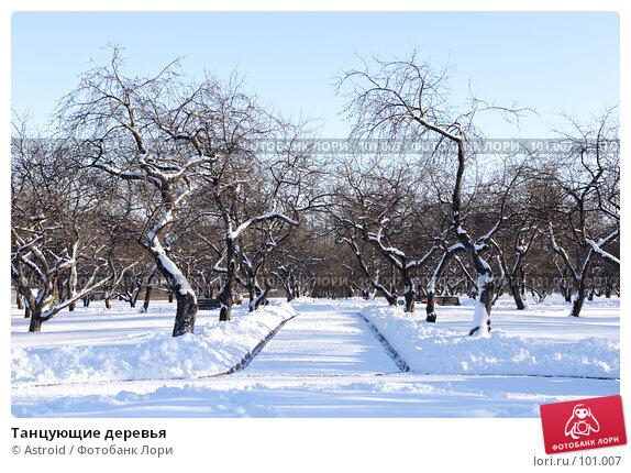 Танцующие деревья, фото № 101007, снято 11 февраля 2007 г. (c) Astroid / Фотобанк Лори