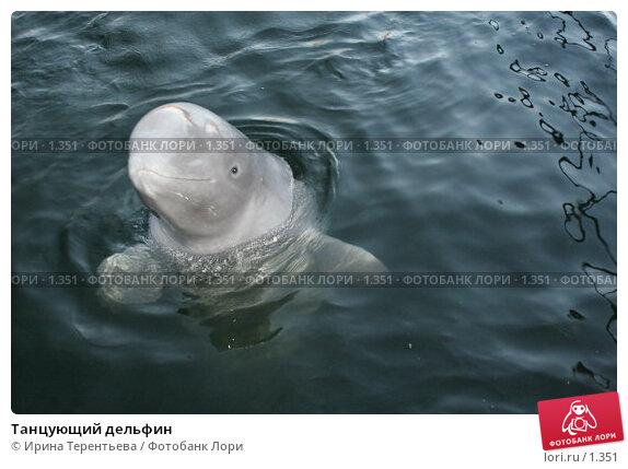 Танцующий дельфин, эксклюзивное фото № 1351, снято 15 сентября 2005 г. (c) Ирина Терентьева / Фотобанк Лори