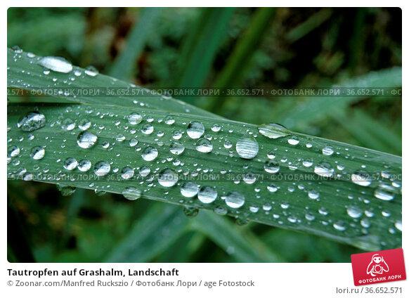 Tautropfen auf Grashalm, Landschaft. Стоковое фото, фотограф Zoonar.com/Manfred Ruckszio / age Fotostock / Фотобанк Лори