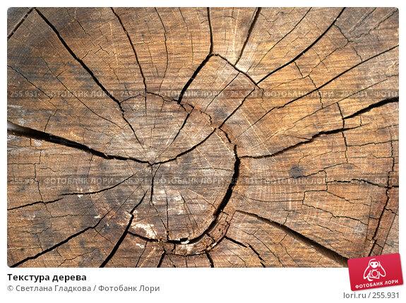 Текстура дерева, фото № 255931, снято 16 июня 2007 г. (c) Cветлана Гладкова / Фотобанк Лори
