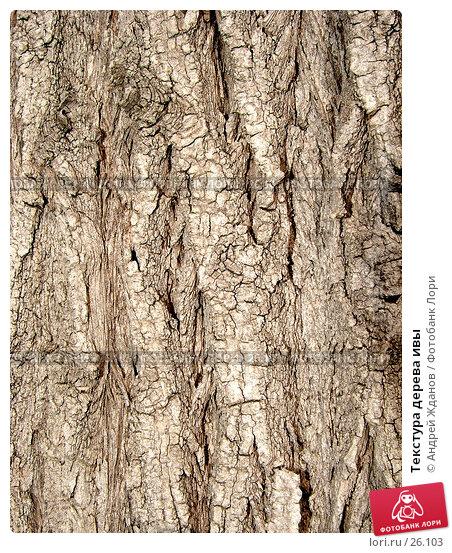 Текстура дерева ивы, фото № 26103, снято 28 июня 2017 г. (c) Андрей Жданов / Фотобанк Лори