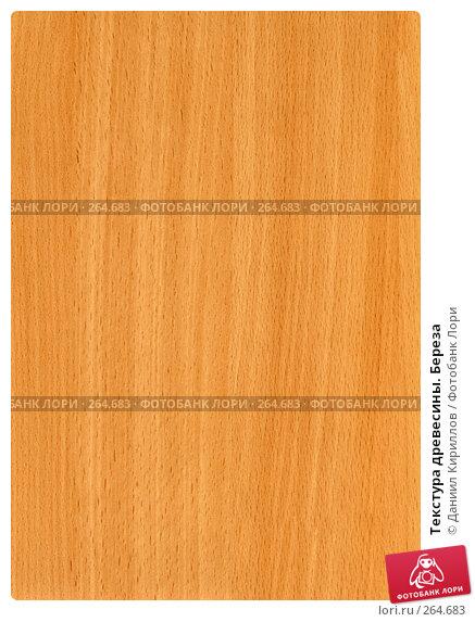 Купить «Текстура древесины. Береза», фото № 264683, снято 25 марта 2018 г. (c) Даниил Кириллов / Фотобанк Лори