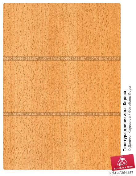 Текстура древесины. Береза, фото № 264687, снято 21 июля 2017 г. (c) Даниил Кириллов / Фотобанк Лори