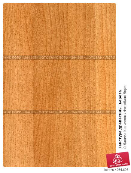 Текстура древесины. Береза, фото № 264695, снято 28 марта 2017 г. (c) Даниил Кириллов / Фотобанк Лори