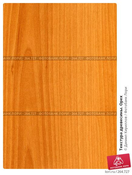 Текстура древесины. Орех, фото № 264727, снято 23 августа 2017 г. (c) Даниил Кириллов / Фотобанк Лори