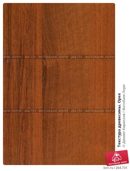 Текстура древесины. Орех, фото № 264731, снято 23 января 2017 г. (c) Даниил Кириллов / Фотобанк Лори