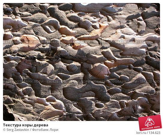 Купить «Текстура коры дерева», фото № 134623, снято 2 октября 2005 г. (c) Serg Zastavkin / Фотобанк Лори