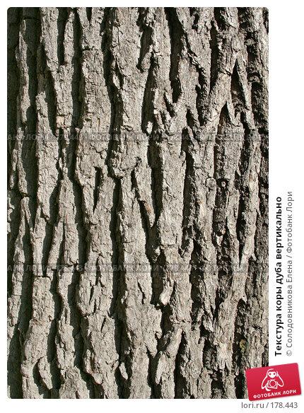 Текстура коры дуба вертикально, фото № 178443, снято 24 сентября 2006 г. (c) Солодовникова Елена / Фотобанк Лори