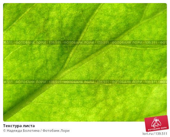 Купить «Текстура листа», фото № 139511, снято 22 марта 2007 г. (c) Надежда Болотина / Фотобанк Лори