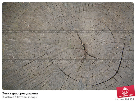 Текстура, срез дерева, фото № 104955, снято 26 марта 2017 г. (c) Astroid / Фотобанк Лори