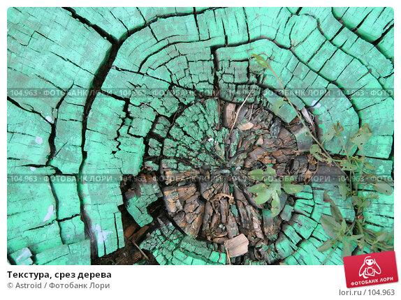 Купить «Текстура, срез дерева», фото № 104963, снято 25 апреля 2018 г. (c) Astroid / Фотобанк Лори